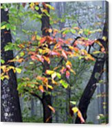 Foggy Fall Forest Acrylic Print