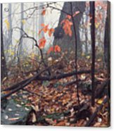 Foggy Fall Woodland Morning Acrylic Print