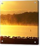 Foggy Flock Of Seagulls Sunrise 9 17 2009 019a Acrylic Print