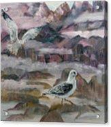 Foggy Gulls Acrylic Print