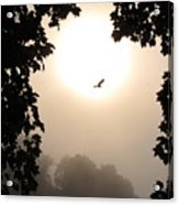 Foggy Heron Flight Acrylic Print