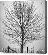 Foggy Lone Tree Hill Fine Art Acrylic Print