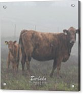 Foggy Mist Cows #0090 Digitally Altered Acrylic Print