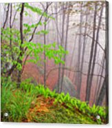 Foggy Misty Spring Morning Acrylic Print by Thomas R Fletcher