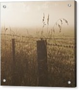 Foggy Morning At A Farm Acrylic Print