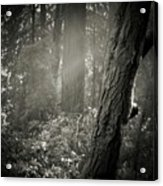 Foggy Morning In The Woods Acrylic Print