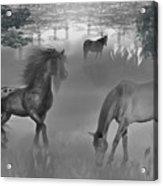 Foggy Morning Pasture Acrylic Print