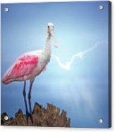 Foggy Morning Spoonbill Acrylic Print