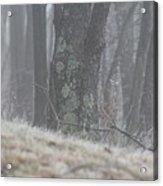 Foggy Moss Acrylic Print