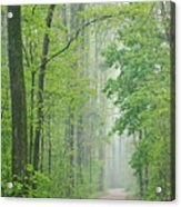 Foggy Spring Forest Acrylic Print