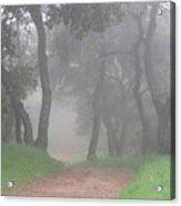 Foggy Trail Acrylic Print