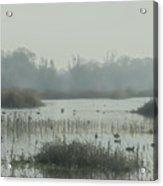 Foggy Wetlands Acrylic Print
