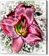Foiled Beauty - Daylily Acrylic Print