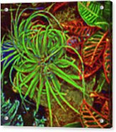 Foliage Abstract 3698 Acrylic Print