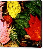 Foliage Closeup Acrylic Print