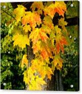 Foliage Fall Acrylic Print