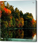 Foliage Reflections Acrylic Print