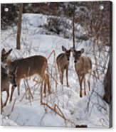 Follow The Leader Acrylic Print