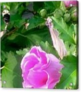 Following A Bumble Bee In Flight Acrylic Print