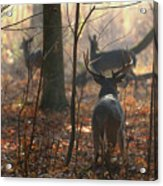 Following The Does Acrylic Print