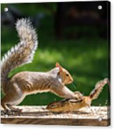 Food Fight Squirrel And Chipmunk Acrylic Print