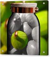 Food Fruit Figs 1 Acrylic Print