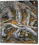 Foot Of The Tree Acrylic Print