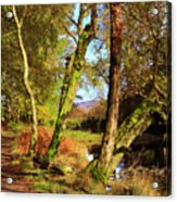 Footpath At The Edge Of Lantys Tarn In The Lake District Cumbria Acrylic Print