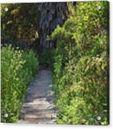 Footpath In Peters Canyon I Acrylic Print