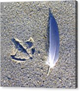 Footprint And Feather Acrylic Print