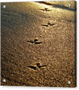 Footprints - Bird Acrylic Print