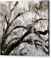 For The Grace Of The Beauty Of A Aged Tree Acrylic Print