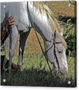 For The Love Of His Horse Acrylic Print
