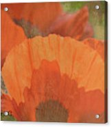 For The Love Of Poppy Acrylic Print