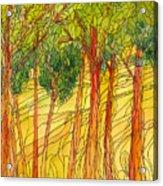 Forest #15 Acrylic Print