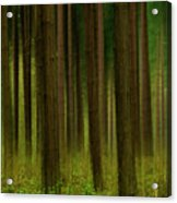 Forest Abstract01 Acrylic Print