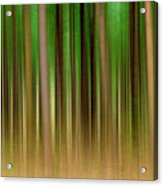Forest Abstract04 Acrylic Print by Svetlana Sewell