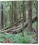 Forest And Ferns Acrylic Print
