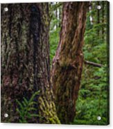 Forest At Camp Creek, Olympic National Forest, Washington, 2016 Acrylic Print