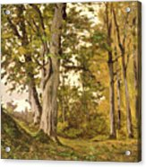 Forest At Fontainebleau Acrylic Print