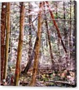 Forest Bling Acrylic Print