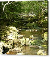 Forest Bridge Acrylic Print