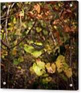 Forest Butterfly Acrylic Print