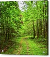 Forest Byway Acrylic Print