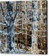 Forest Calm Acrylic Print