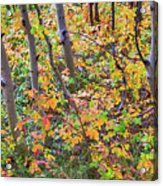 Forest Colors Acrylic Print