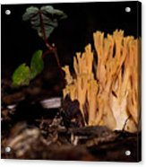 Forest Coral Fungi Acrylic Print
