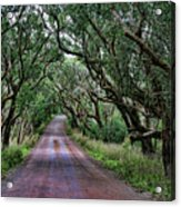 Forest Corridor Acrylic Print
