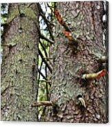 Forest Corrosion Bark Acrylic Print