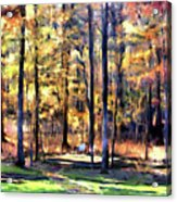 Forest Deck Acrylic Print